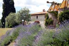 farmhouse with lavenders