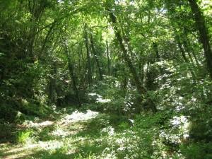 vegetazione lussureggiante nel parco alto merse