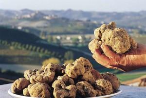 mercato tartufo bianco dal 29 ottobre al 1 novembre volterra toscana
