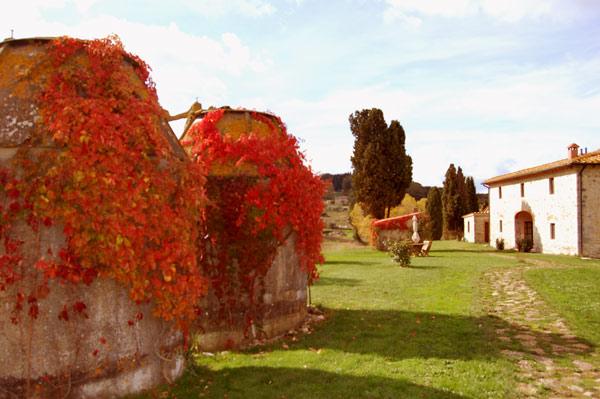 edera con fogle rosse in autunno nella villa toscana