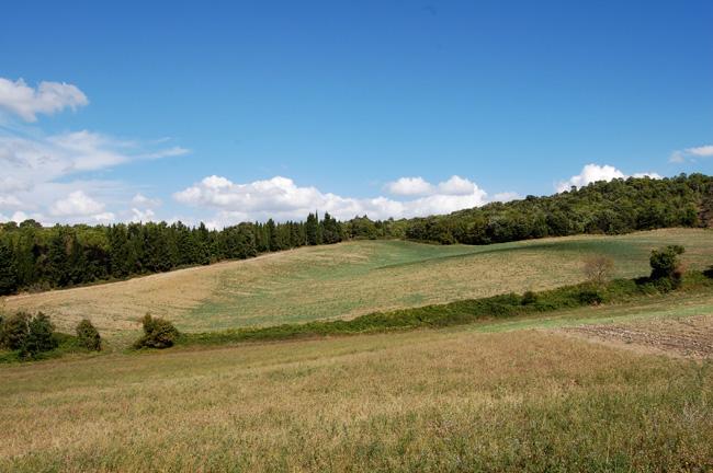 vista dal casale con campi e boschi