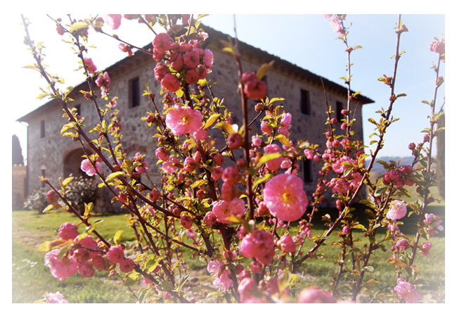 Poto della villa in Toscana in primavera
