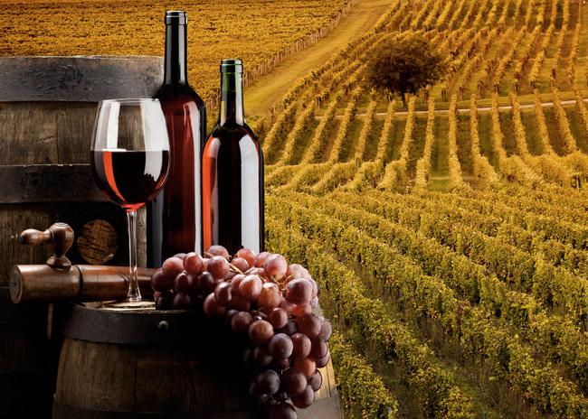 vino degustazione tour del vino
