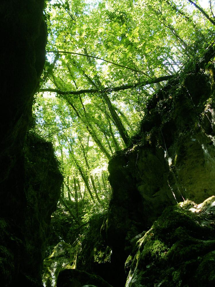 vegetazione-canyon