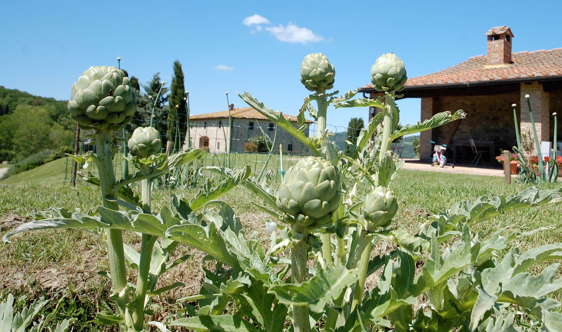 Carciofi in Toscana